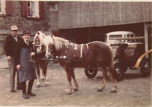 Foto zweier Pferde