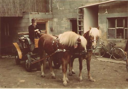 Foto mit zwei Pferden