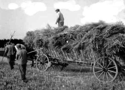 Schwarz-Weiß Foto eines Leiterwagens mit Getreide