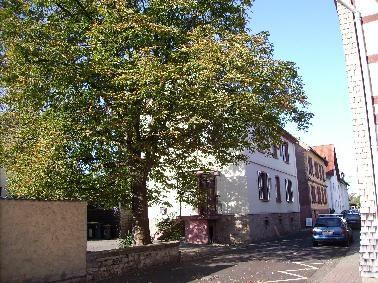 Baum mit Haus dahinter
