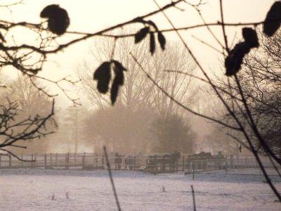 Pferde auf der Koppel im Winter