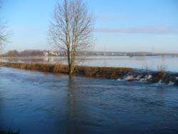 Baum am Fluß im Winter